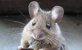 Ho scelto un topino che fa tenerezza