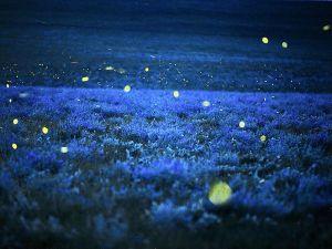 L'incanto delle lucciole (foto Jim Richardson,da nationalgeographic.it)