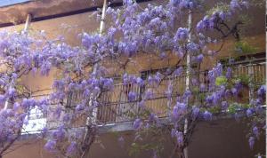 """""""fiori bellissimi avvinghiati a una sbarra""""..."""